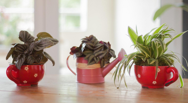 Composition végétale tasses