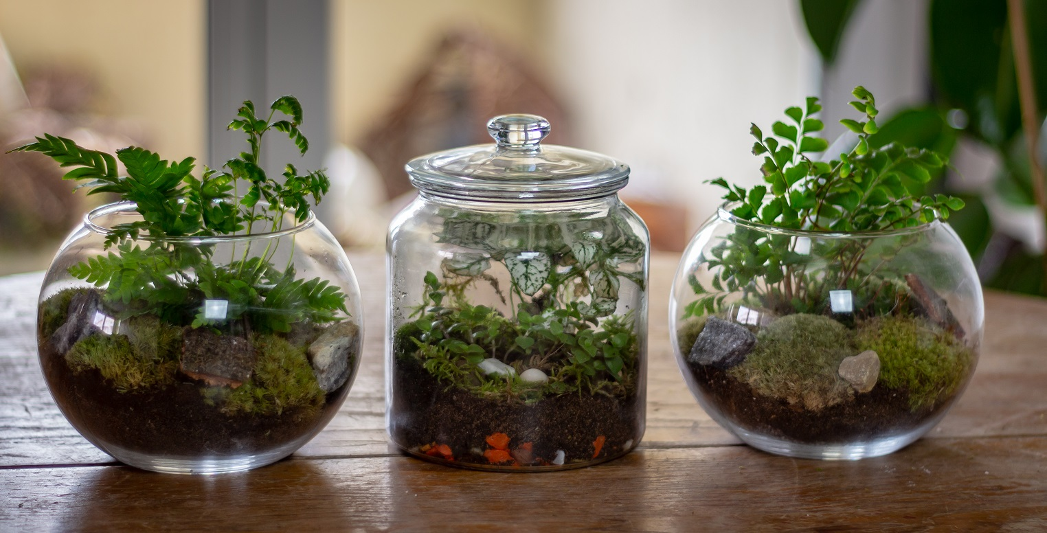 Jardin miniature terrarium
