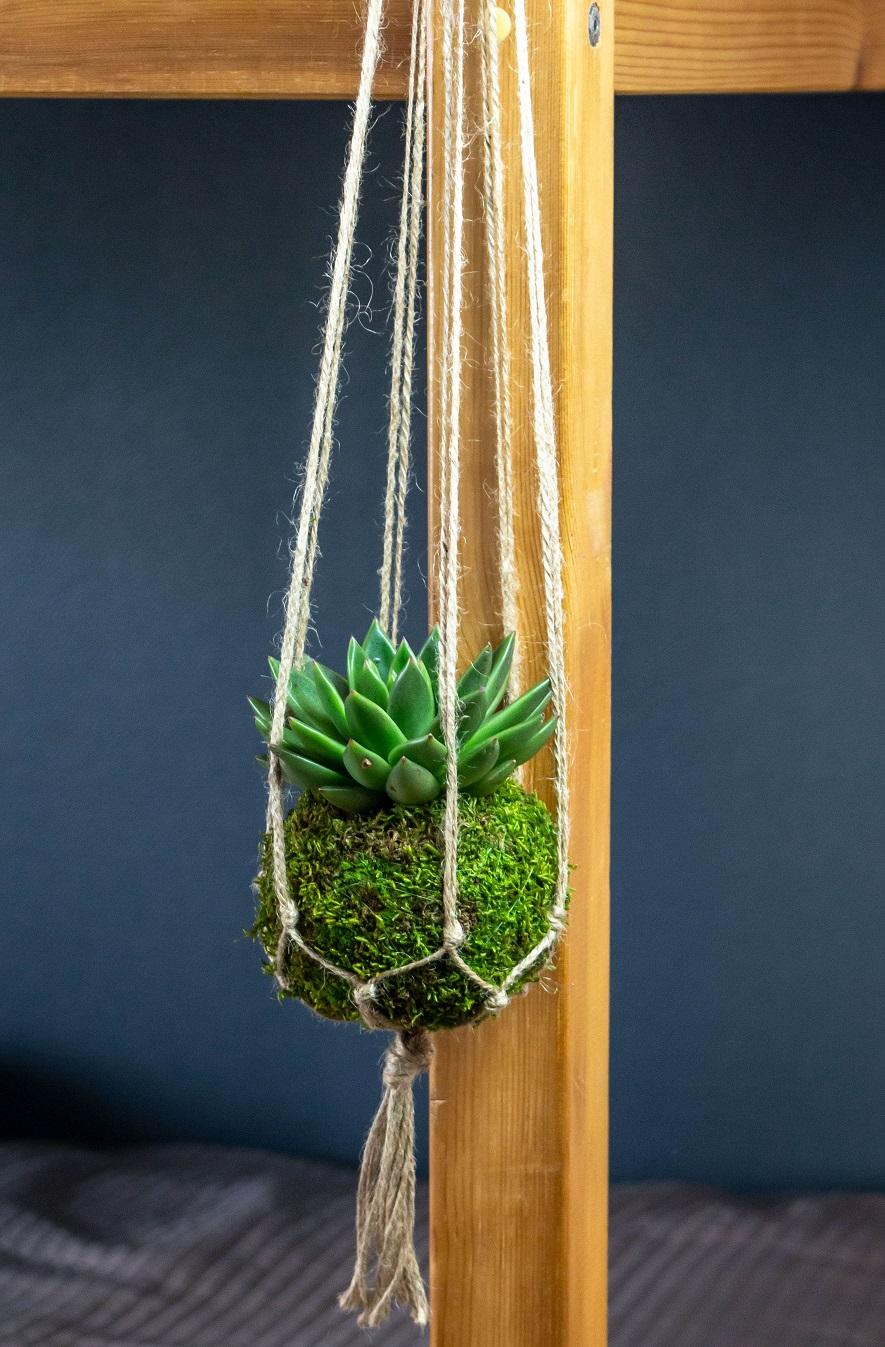 Kokédama succulente suspendu